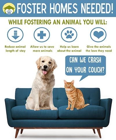 Foster a dog or a cat!