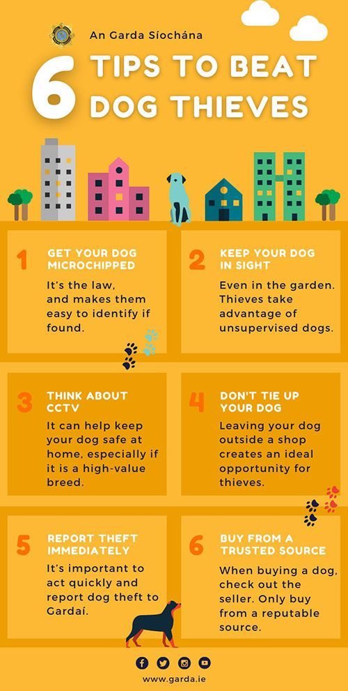 GARDA Tips to protect our pets